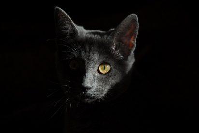 [VÍDEO] El 'gato puñetero' que ladra y que disimula cuando lo descubren