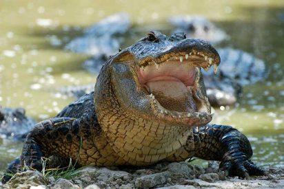 [VÍDEO] El feroz cocodrilo de dos metros que ha encontrado una familia en su piscina