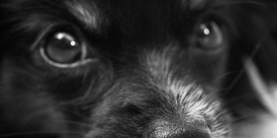 [VÍDEO] Los curiosos animales terapéuticos en aeropuertos de EE.UU.