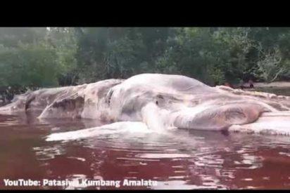 [VÍDEO] Esta es la extraña y aterradora criatura aparecida en una playa de Indonesia