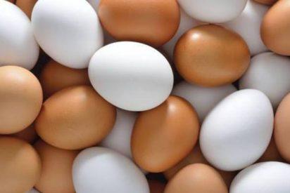¿De qué depende la forma de los huevos de las aves?