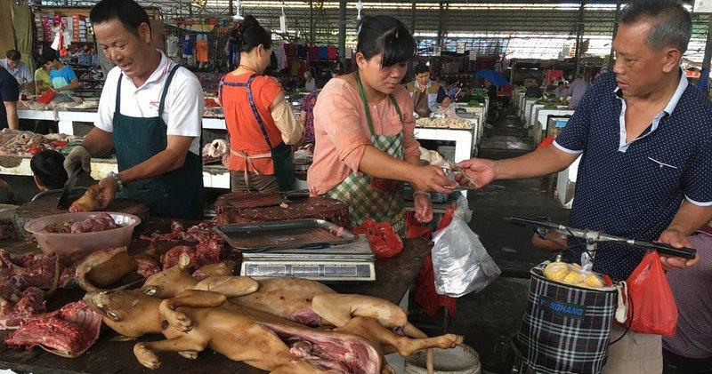 Perros: Comienza en China el festival culinario más polémico y brutal del mundo