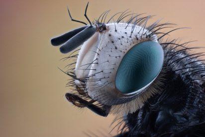 [VÍDEO] TVE advierte de que hay municipios en alerta por una plaga de mosca negra