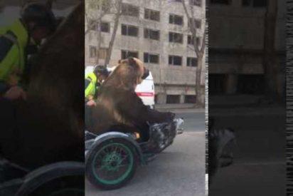 [VÍDEO] El oso motero que revoluciona Internet