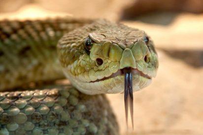 [VÍDEO] Una mujer atrapa una serpiente con una funda de almohada