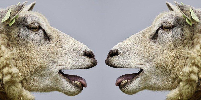 ¿Pueden los animales predecir los terremotos?