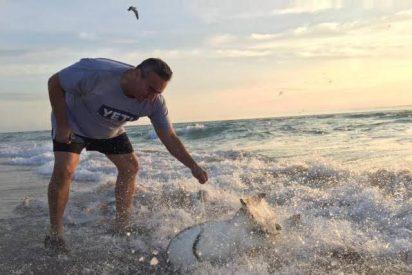 [VÍDEO] Un hombre se arriesga para salvar a un tiburón en Hollywood