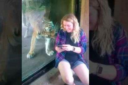 [VIDEO] El inquietante momento que vivió esta embarazada con un tigre