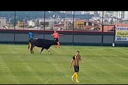 [VÍDEO]Un toro se cuela en un campo de fútbol durante el partido