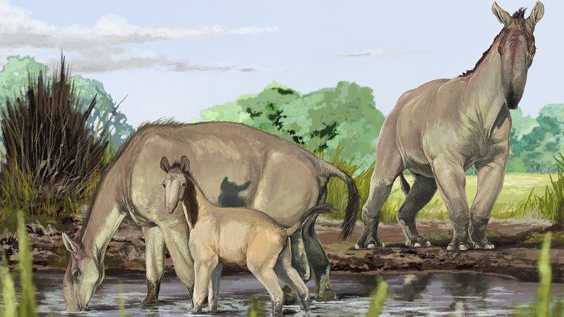 Los mamíferos que sorprendieron a Darwin encuentran por fin hogar