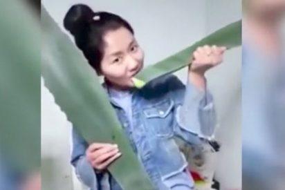 [VÍDEO] Esta chica se come una planta durante una transmisión en vivo y descubre que es venenosa