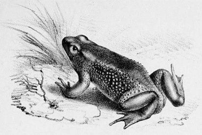 [VÍDEO] Logra revivir a una especie extinta