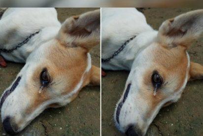 [VÍDEO] Este perrito se sacrificó para salvar a sus dueños de unos ladrones