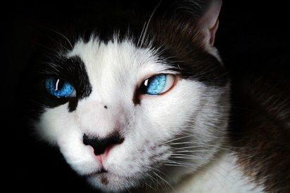 ¡OJO! Muere la primera persona mordida por un gato