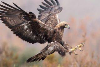 Máquinas de matar: el águila real