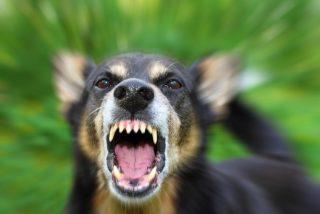 Este es el motivo científico por el que nunca debes gritar a tu perro