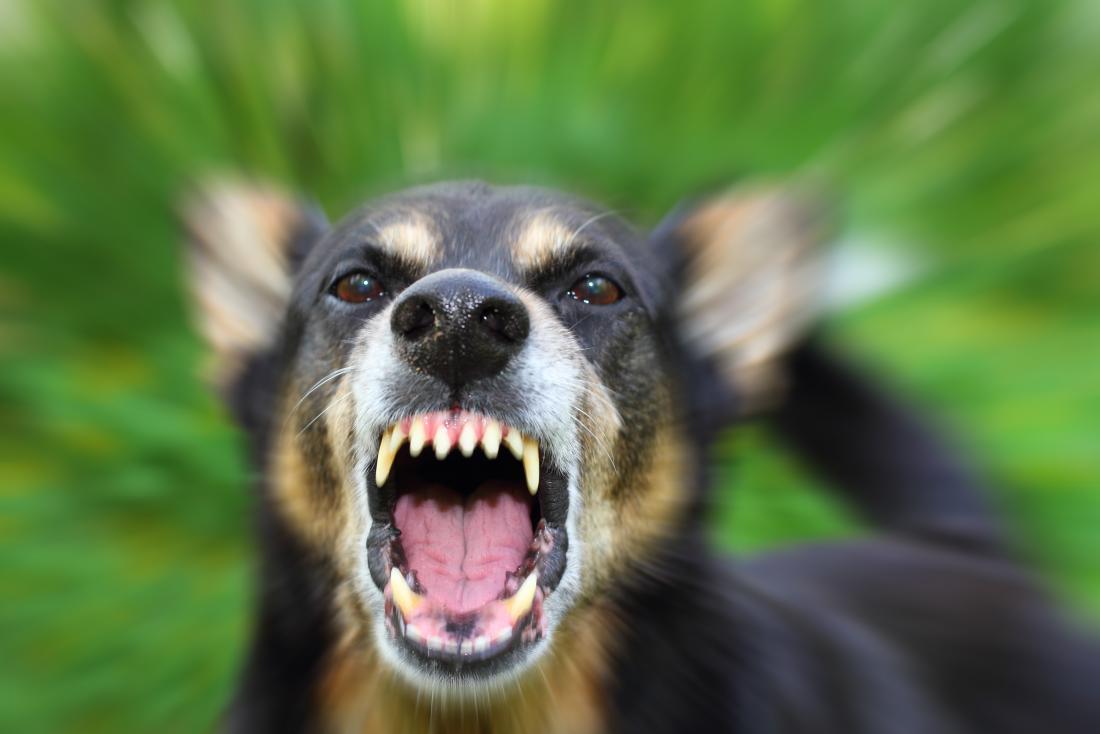 Utiliza a un agresivo perro adiestrado para agredir a su madre