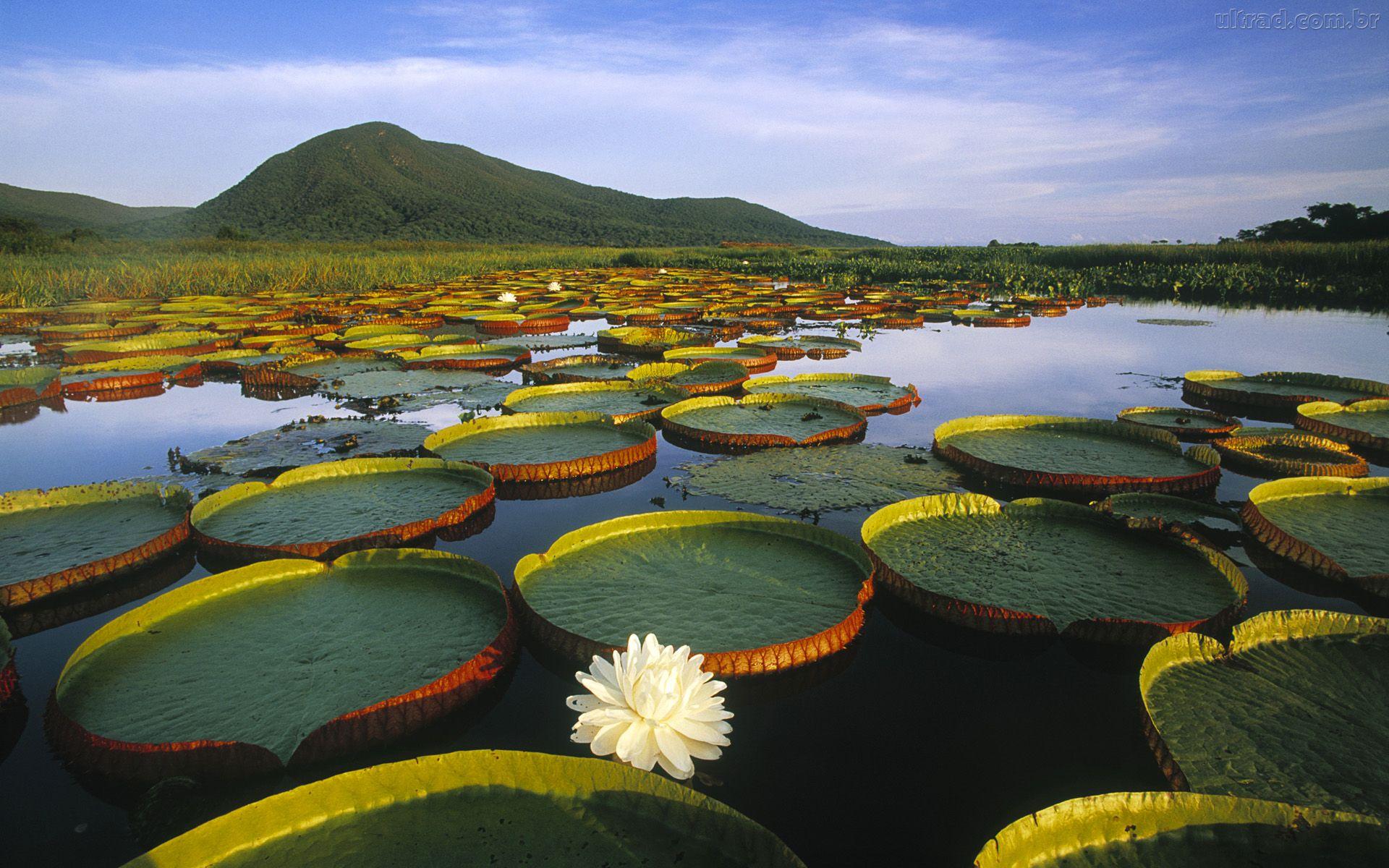 La Amazonía está en venta y liquidación
