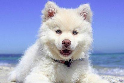 ¡Guau!: estos son los beneficios de tener perro