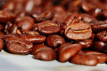 Las tóxicas y peligrosas semillas de los frijoles tonka