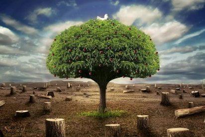 """""""Enlázate por la justicia"""" pide a los gobiernos que reduzcan la desigualdad cuidando la naturaleza"""