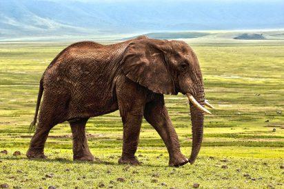 Turista español muere tras ser embestido por un elefante en Etiopía