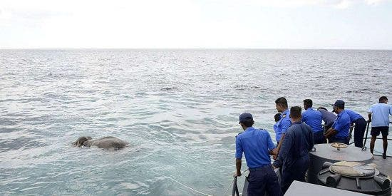 El insólito vídeo del elefante que se está ahogando en el mar