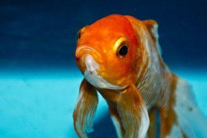 El caradura se va de vacaciones y deja a su pez en el portal para que se lo cuiden los vecinos