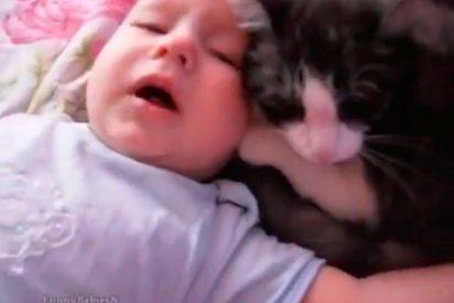 [VIDEO] El gato que calma el llanto de esta bebé se hace viral