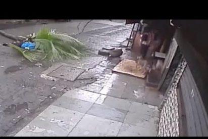 [VÍDEO] Esta presentadora de la India muere después de ser aplastada por una palmera