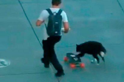 [VIDEO] El perrito skater que se ha hecho viral en la red
