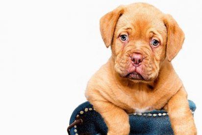 Los 10 gestos con los que tu perro te dice te quiero