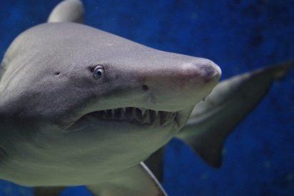 [VÍDEO] Aterrador vídeo de un tiburón atacando a un pescador