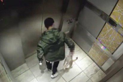 [VÍDEO] El desalmado que maltrata cruelmente a su perrito en el ascensor