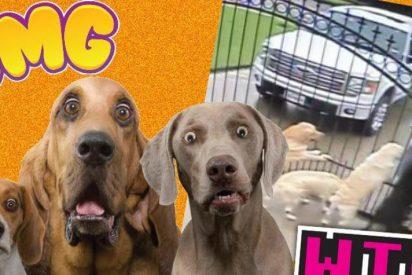 [VÍDEO] Graban en secreto a su cartero y lo descubre haciéndole esto a sus cinco perros