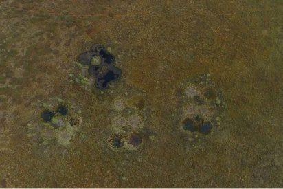 [VÍDEO] ¿Qué son estos extraños cráteres en un área remota de la taiga rusa?