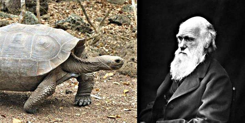 El naturalista Charles Darwin se merendó 48 tortugas gigantes en peligro de extinción