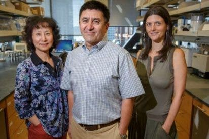 Científicos logran corregir una grave enfermedad hereditaria en embriones humanos