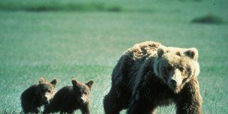 Tres osos: el timorato, el cagón y el valiente