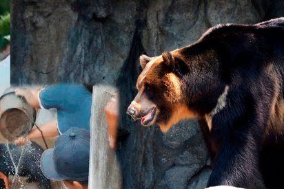 [VÍDEO] El salvaje ataque de este enorme oso a un turista da la vuelta al mundo
