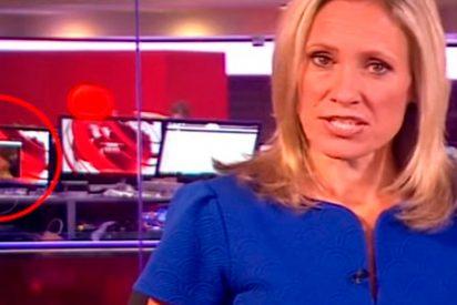 [VÍDEO] Un informativo de la BBC emite escenas eróticas por accidente