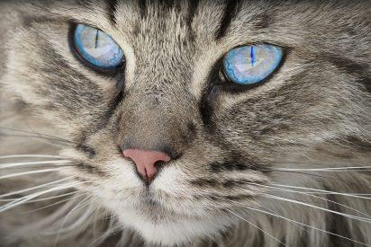 [VÍDEO] La impresionante forma de crear un 'paraíso' para gatos con 50 cajas de cartón