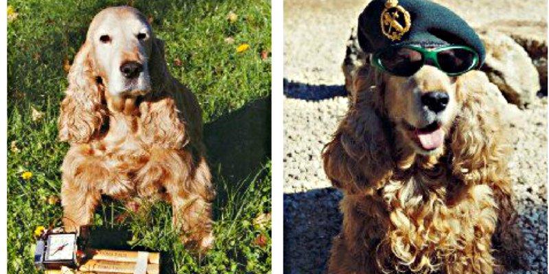 La Guardia Civil pega un mordisco a los majaderos que lanzan bulos sobre los perros policía