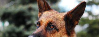 [VÍDEO] Perro policía se descontrola en el arresto a un hombre