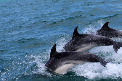 [VÍDEO] Espectaculares imágenes de decenas de delfines saltando en el cabo de Gata
