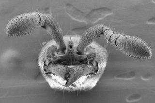 [VÍDEO] Estas feroces hormigas mutantes nos dan la clave de su convivencia