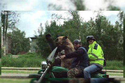 [VÍDEO] El oso más chulo; va de paseo en mototaxi y saluda a sus colegas