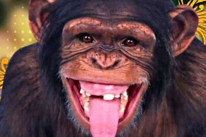 Chica baila twerking para un mono y pasa esto…
