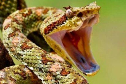 Esto es lo que pasa cuando una serpiente te muerde en un dedo