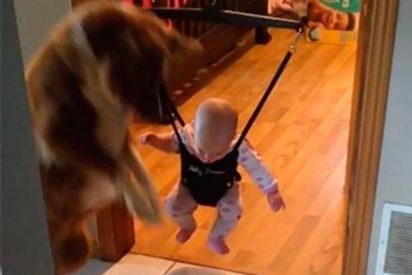 [VÍDEO] El vídeo de este bebé y su perro jugando enternecen las redes